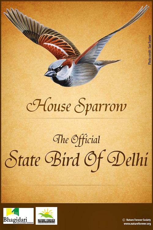 Delhi state bird poster_small