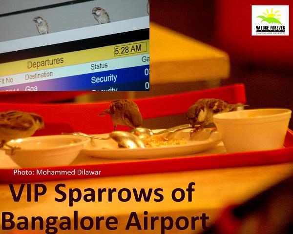 VIP Sparrows