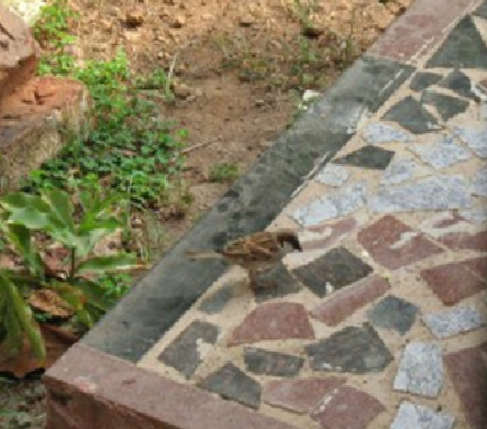 Sparrow in our garden